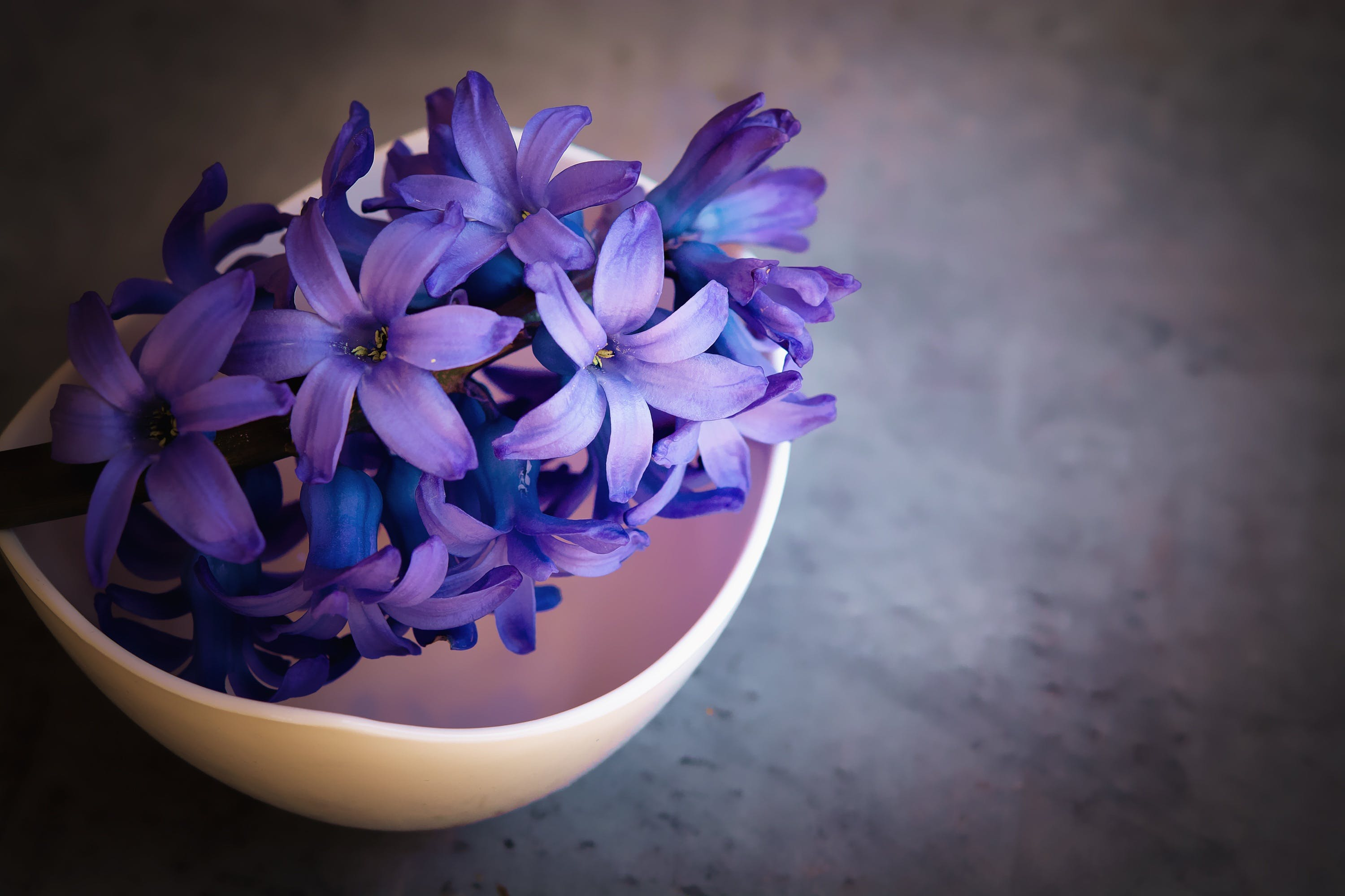 Free stock photo of blue flower, blue flowers, bowl, close