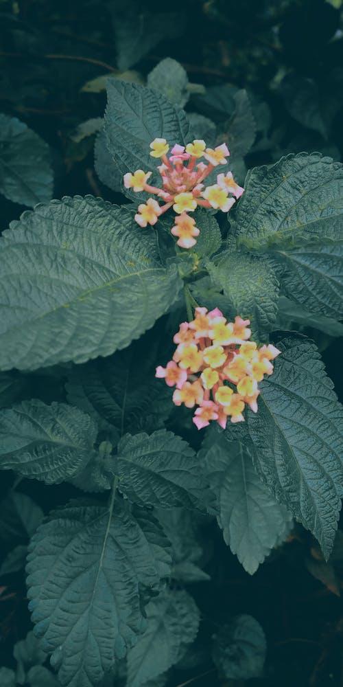 Photos gratuites de plantes à fleurs