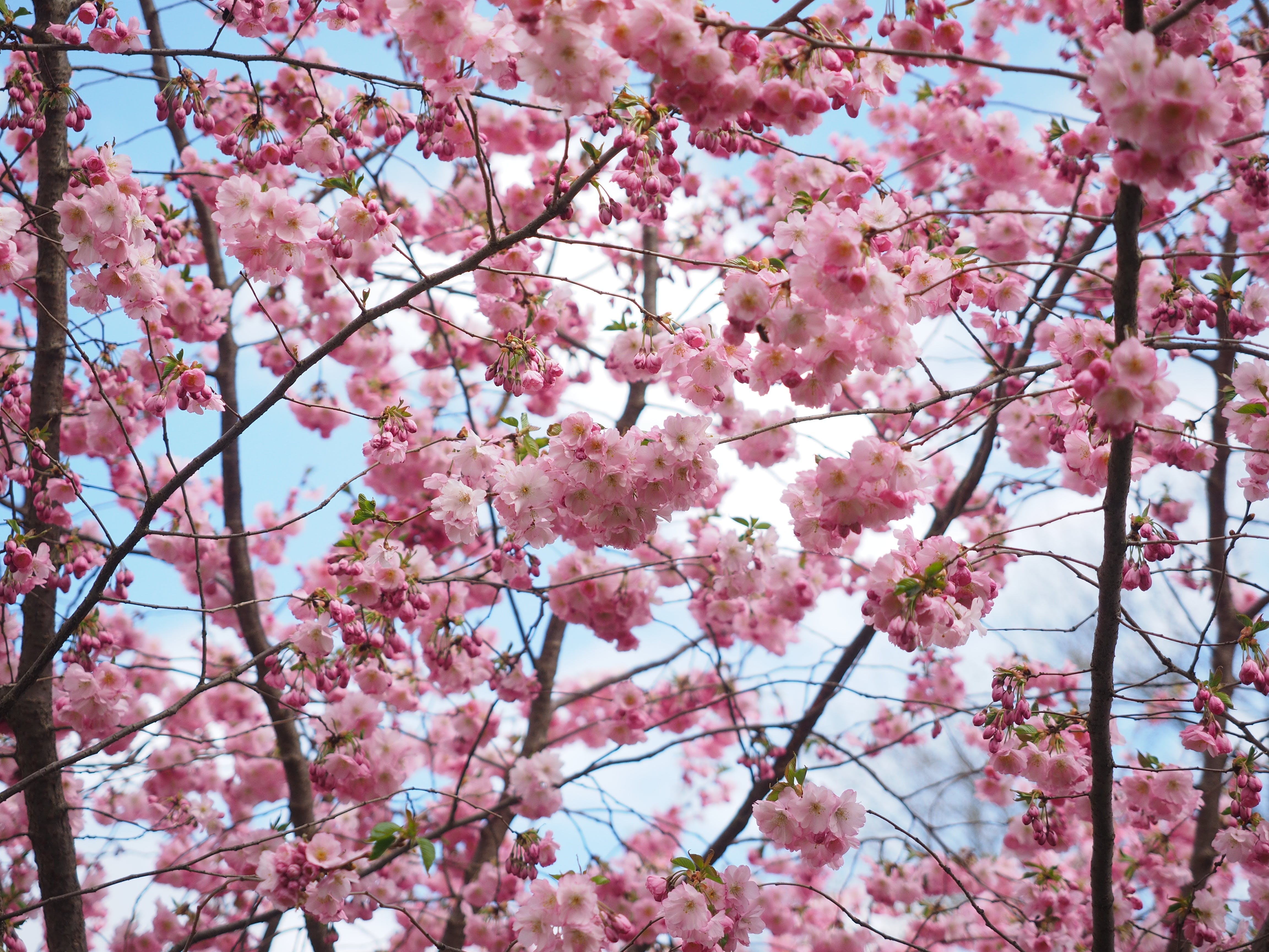 Free stock photo of flowers, spring, tree, colorful