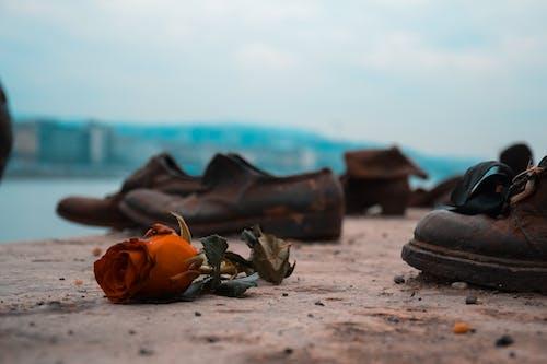 Δωρεάν στοκ φωτογραφιών με Βουδαπέστη, λυπημένος, πατούσες, ποτάμι