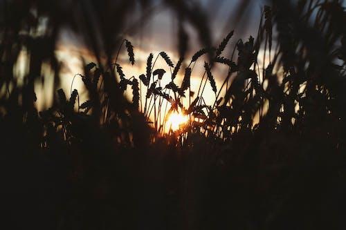 美麗的夕陽 的 免費圖庫相片