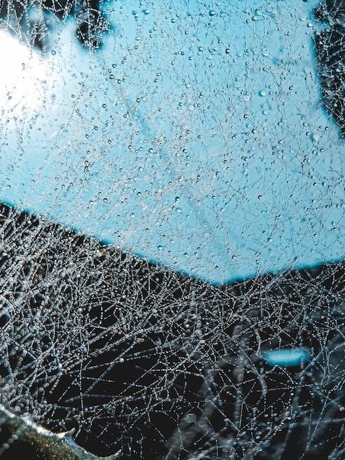 Gratis lagerfoto af dråber, dugdråbe, edderkoppespind, HD-baggrund
