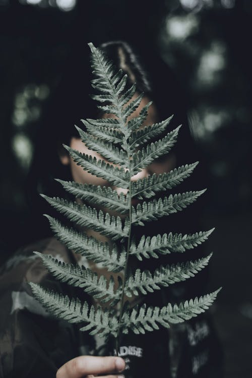 Photo of Person Holding Fern Plant