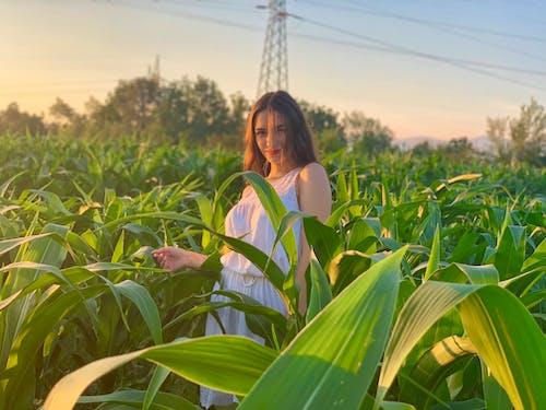 Бесплатное стоковое фото с зеленая кукуруза, зеленый, зерновое поле, красивая девушка