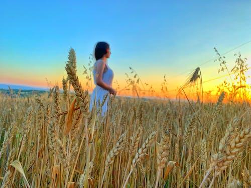 Imagine de stoc gratuită din atmosferă de vară, câmp, fată frumoasă, galben