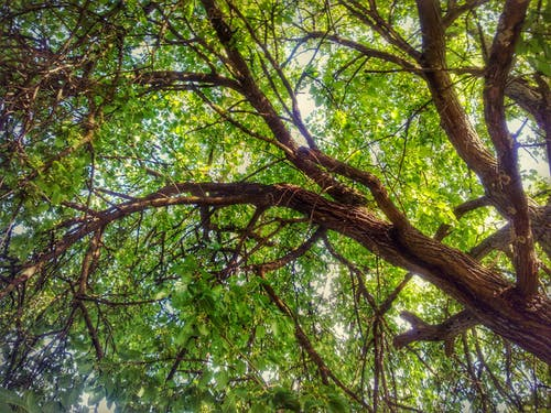 Бесплатное стоковое фото с высокое дерево, дерево, зеленое дерево, зеленый