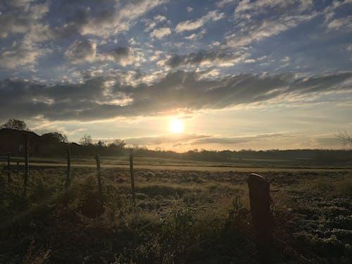 Imagine de stoc gratuită din dimineață, dimineața devreme, dimineața strălucește, galben
