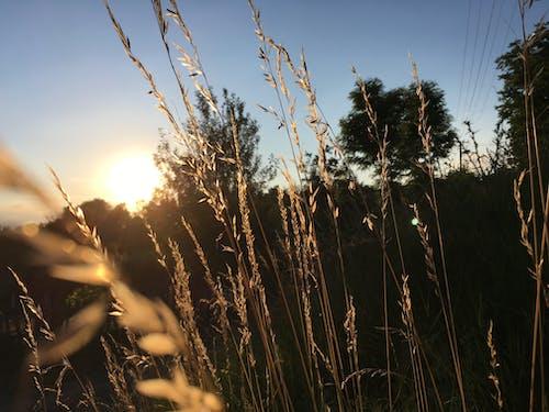 Бесплатное стоковое фото с желтая трава, желтый, завод, красота в природе