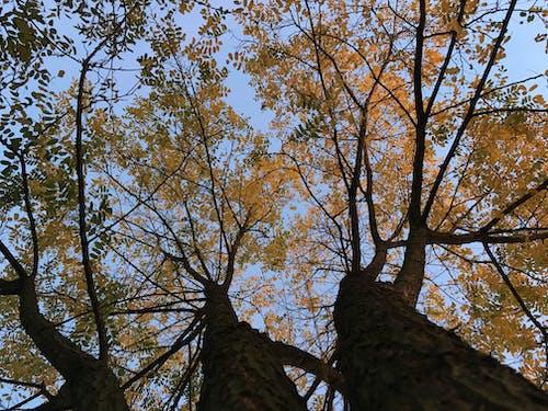 Бесплатное стоковое фото с высокие деревья, высокое дерево, дерево, деревья