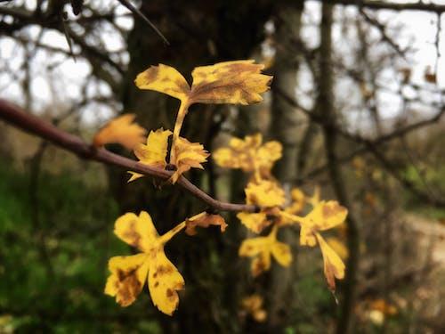 Бесплатное стоковое фото с апельсин, большой лист, дерево, желтый