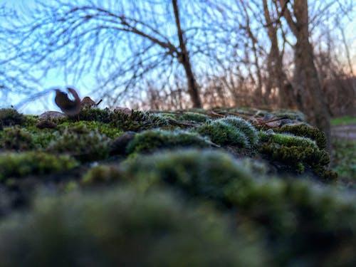 Бесплатное стоковое фото с бальк стена, зеленый мох, мох, осень