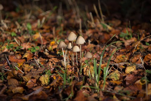 Gratis stockfoto met aarde, Bos, champignons, close-up
