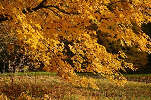 Ingyenes stockfotó évszak, festői, fű, őszi lomb témában