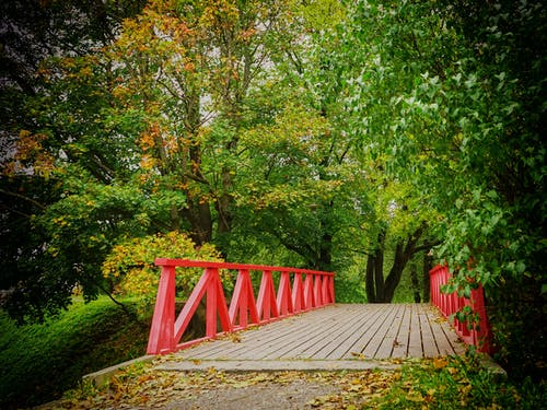Darmowe zdjęcie z galerii z drewno, drzewa, most