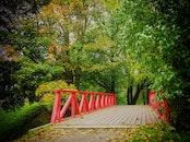 wood, bridge, trees