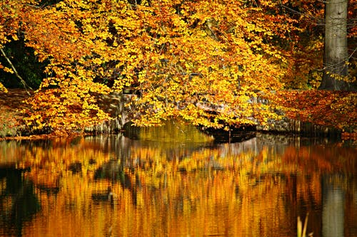 Lake Surrounded by Yellow and Brown Leaves