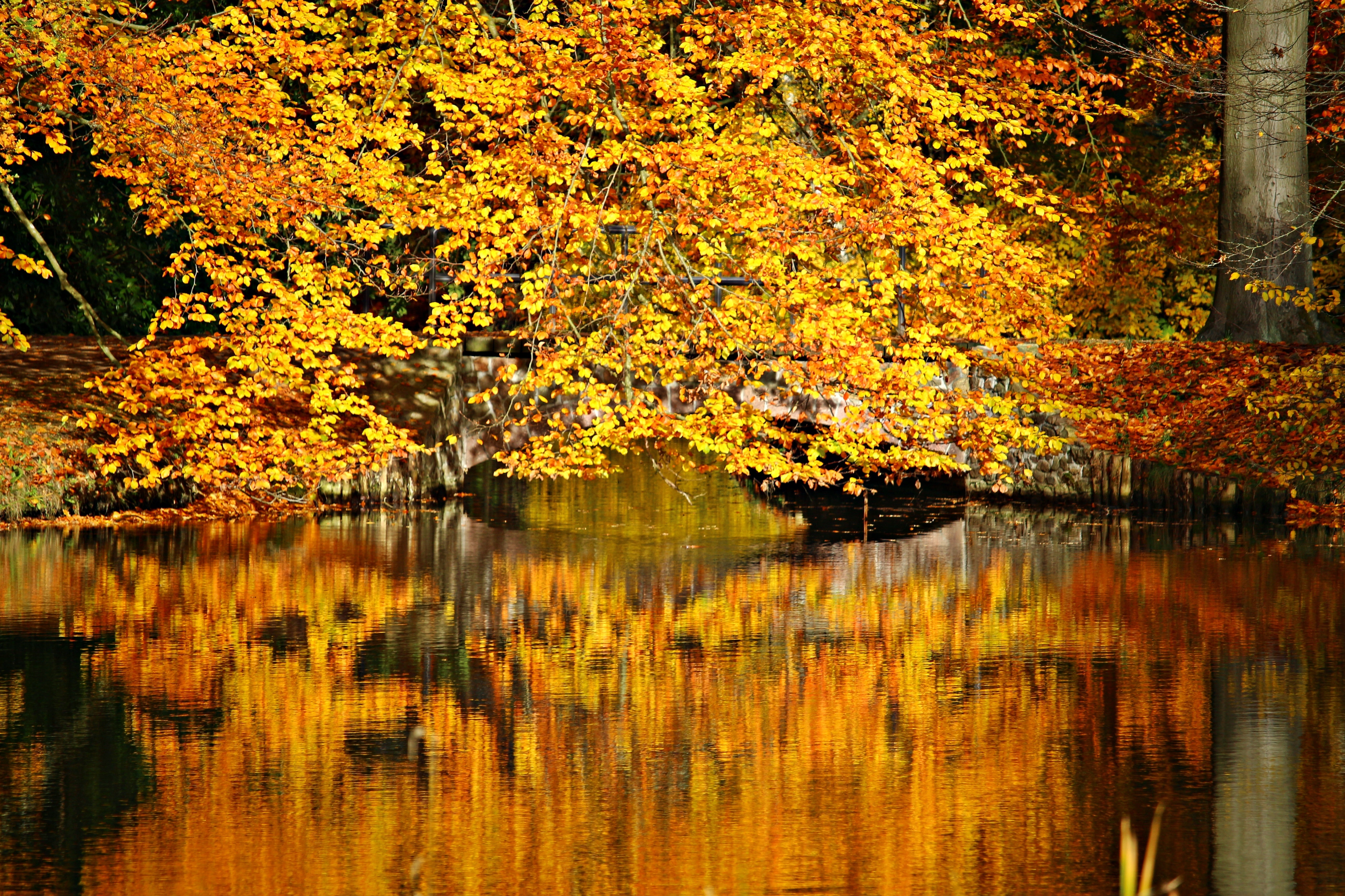 Maple Tree And Body Of Water Photo 183 Free Stock Photo