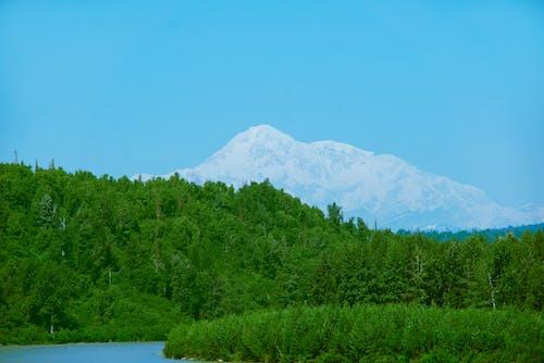Foto stok gratis alaska, denali, gunung