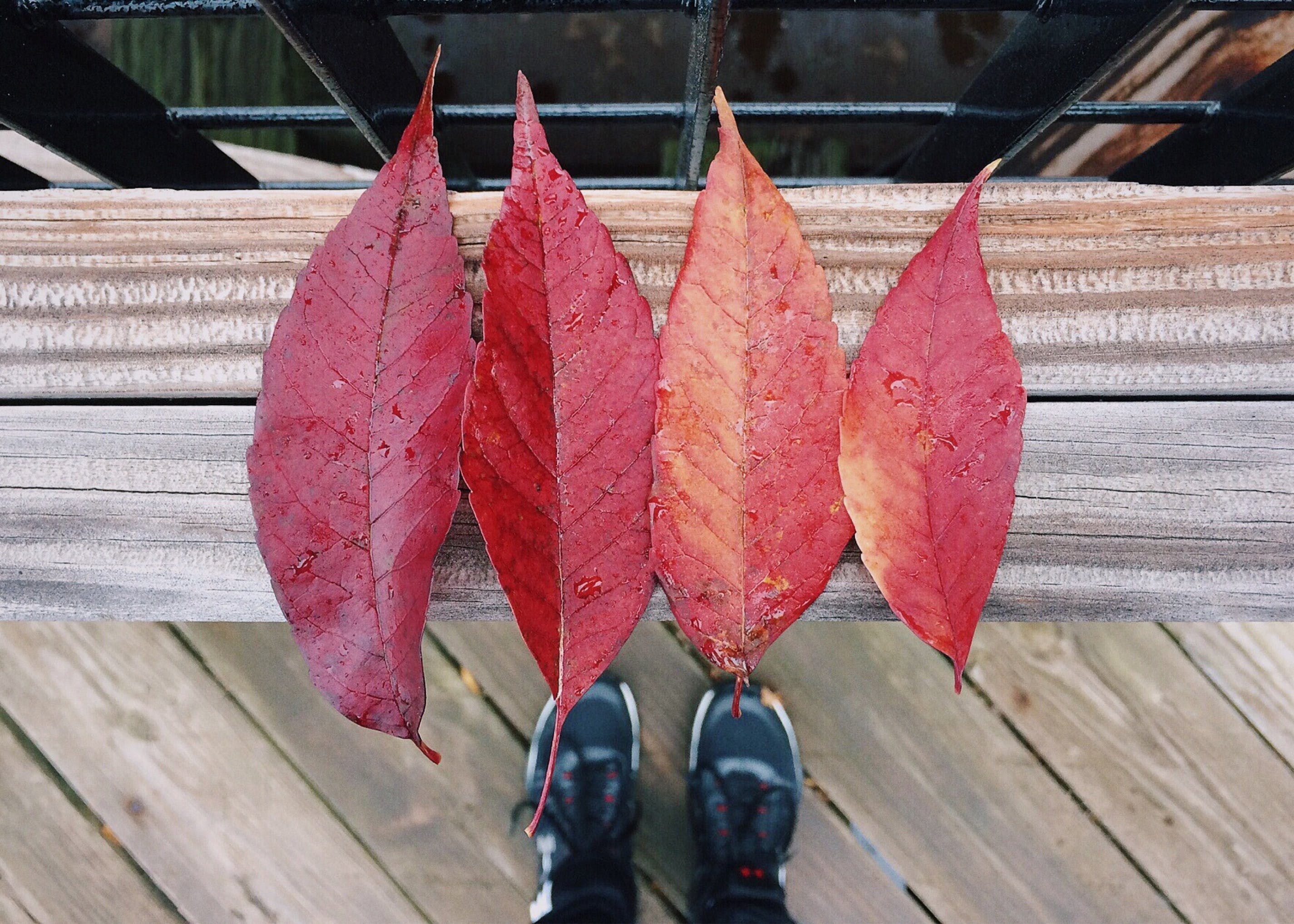 Free stock photo of autumn, color, fall, leaves