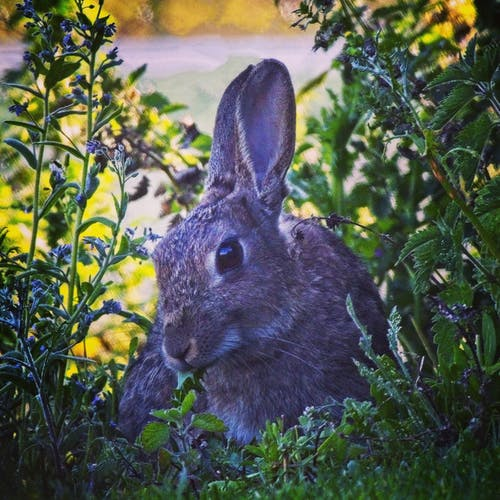 Foto stok gratis #rabbit #nature #grass #summer