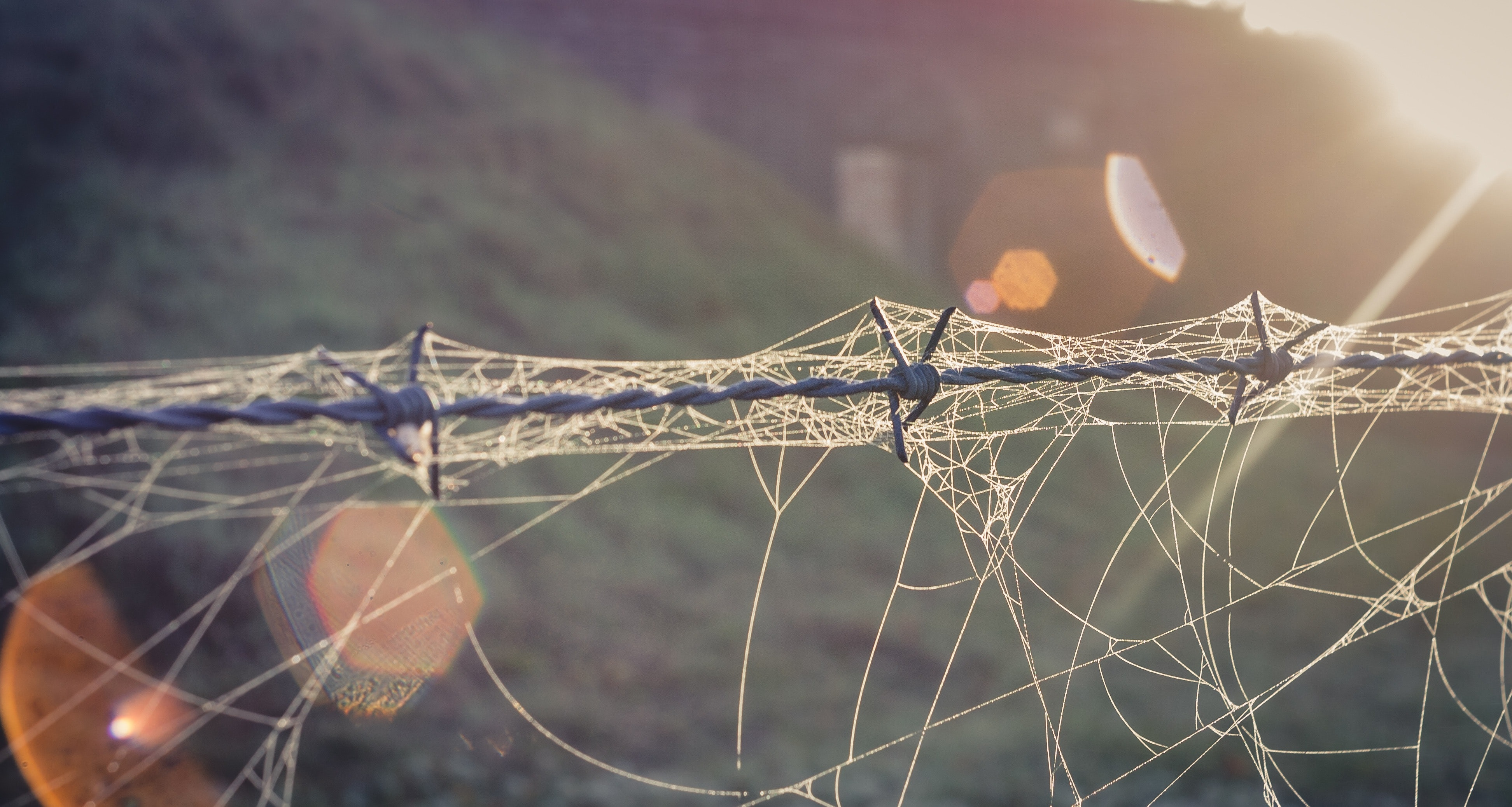 Free stock photo of autumn, back light, barbed wire