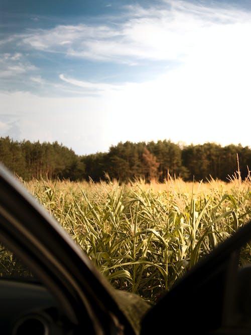 Photos gratuites de agriculture, arbres, campagne, ciel