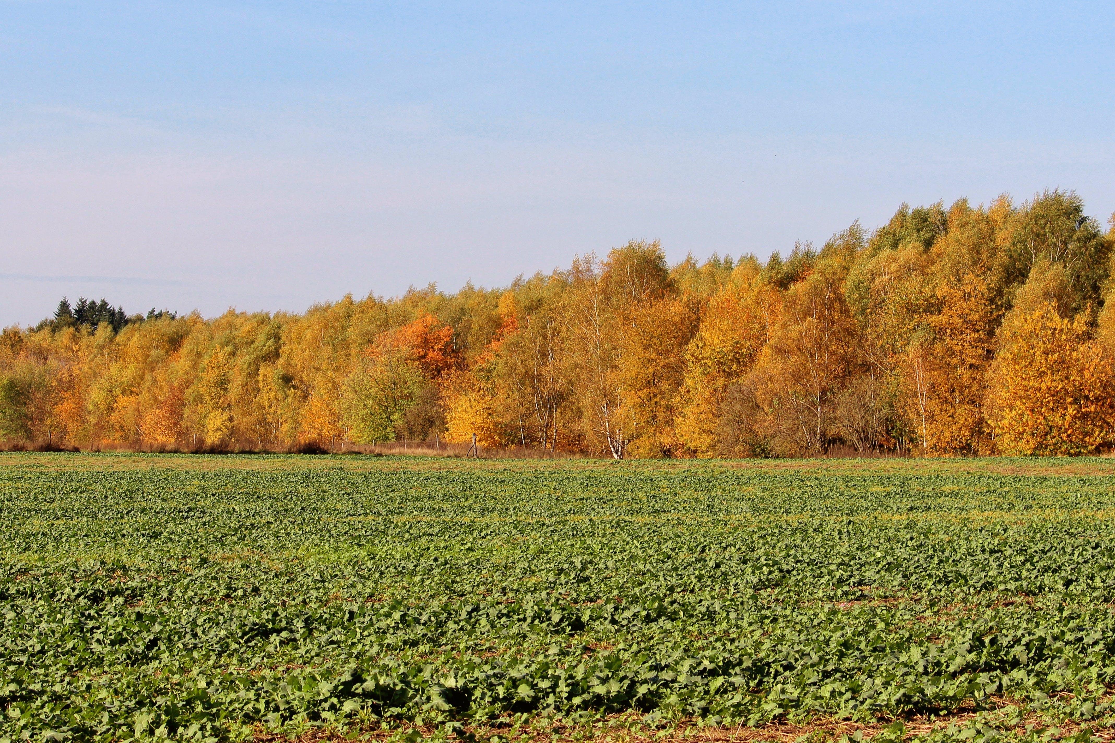 agriculture, autumn colours, calm