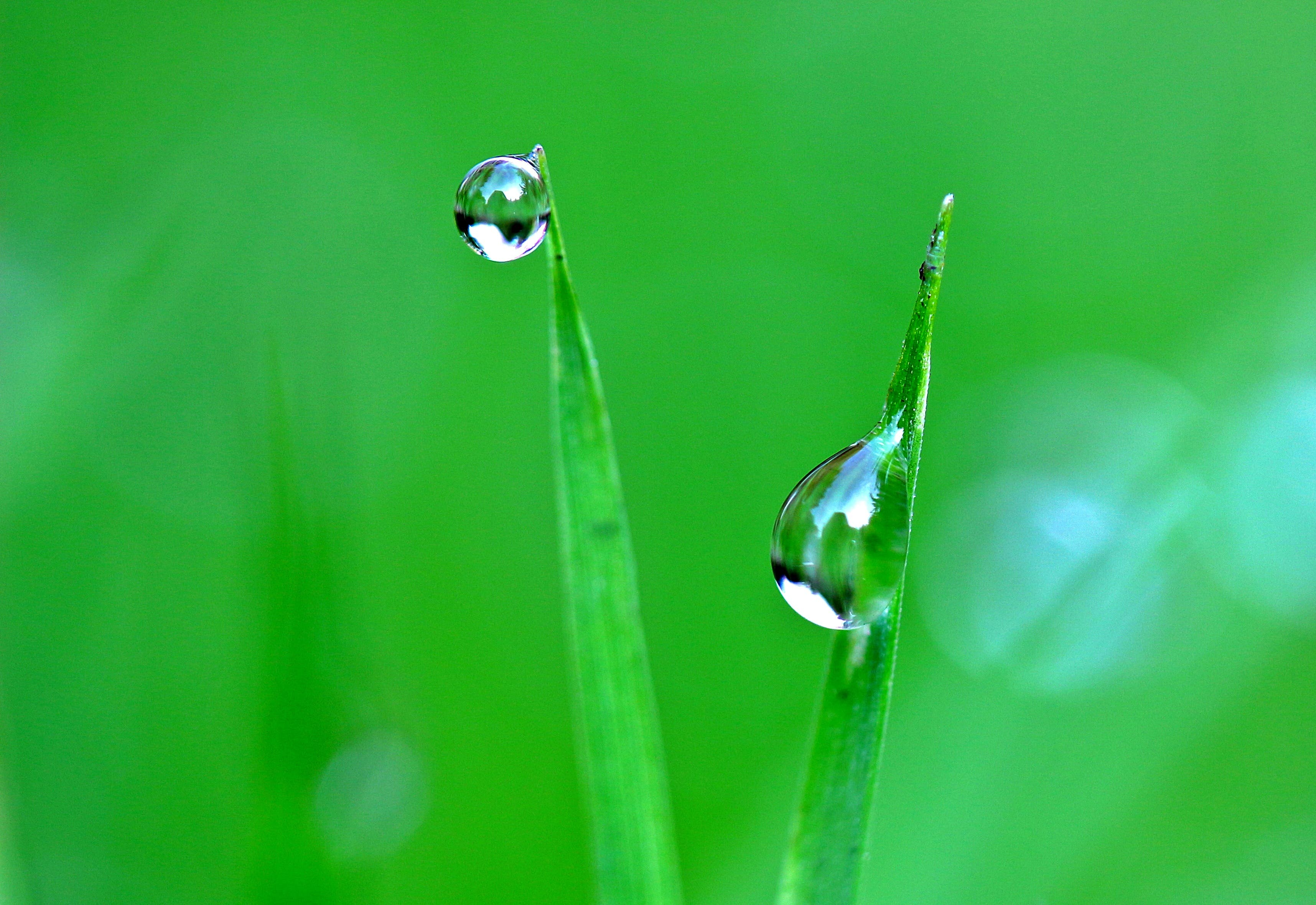 Close-up Photo of Drop of Water on Plants