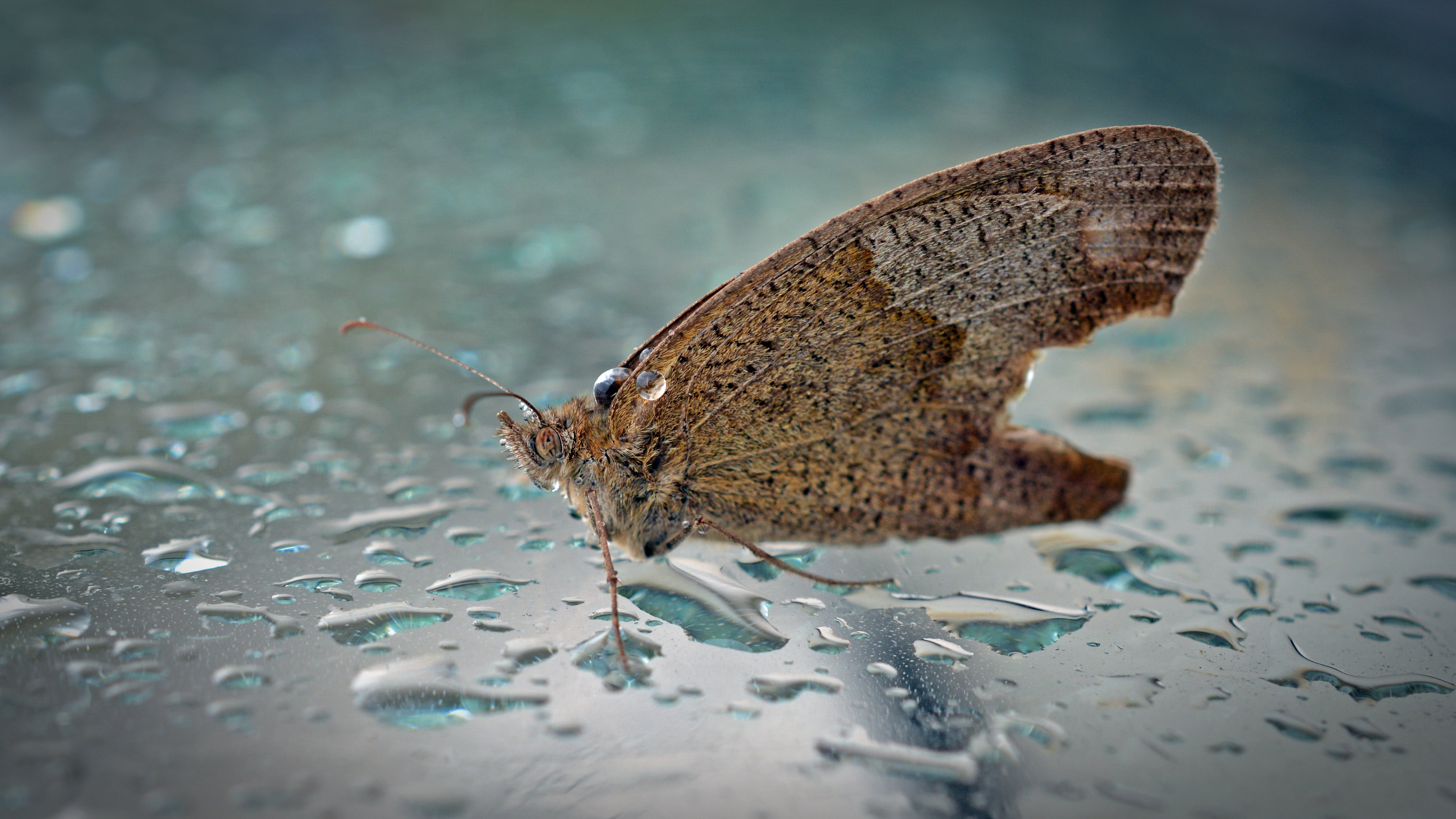 Free stock photo of animal, butterfly, close, insect