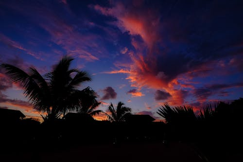 Green Palm Trees during Sunset