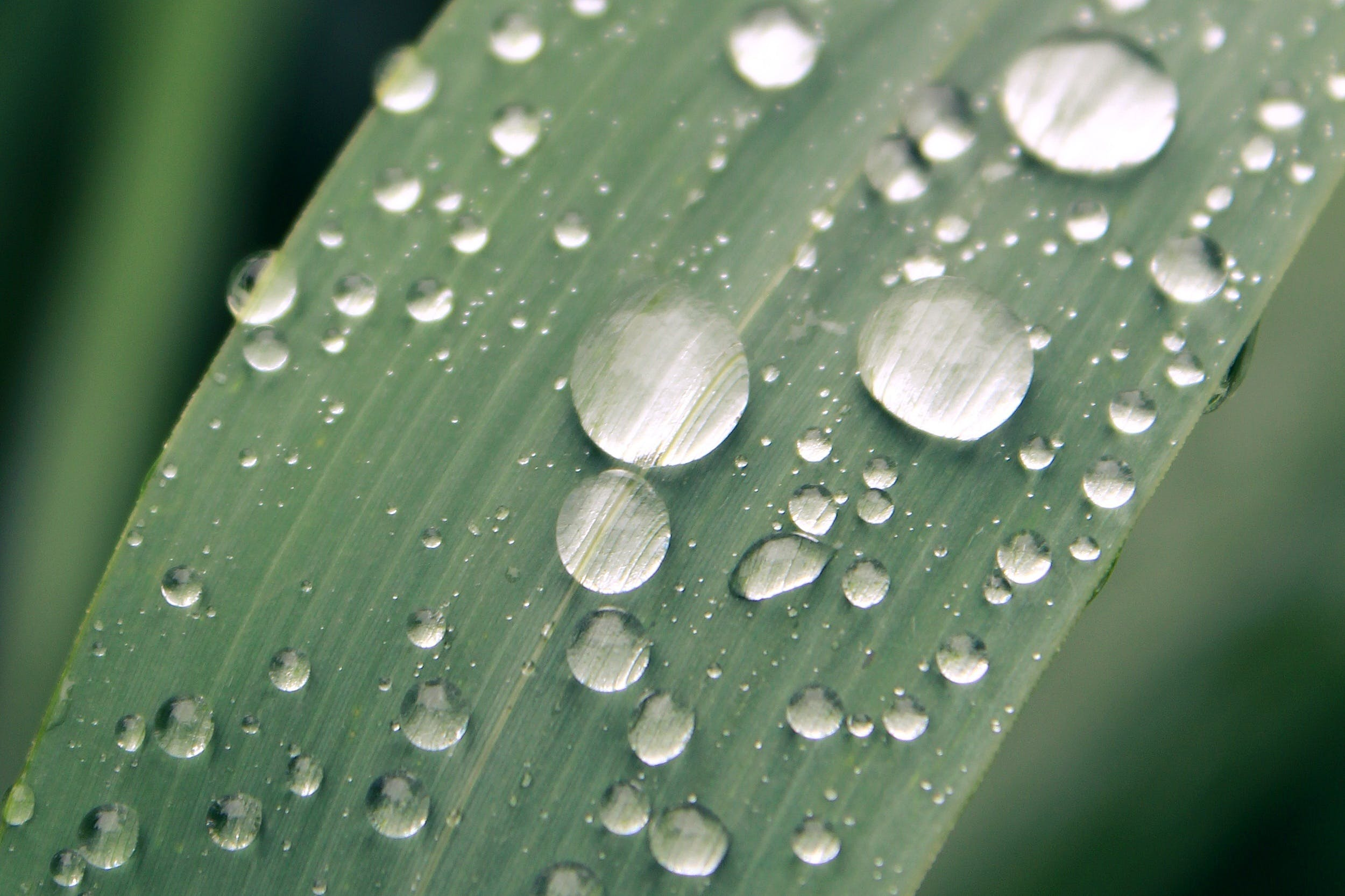 Macro Photography of Water Droplets on Leaf