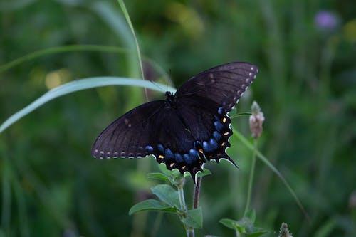 Ảnh lưu trữ miễn phí về bướm trên hoa, Con bướm, ở ngoài