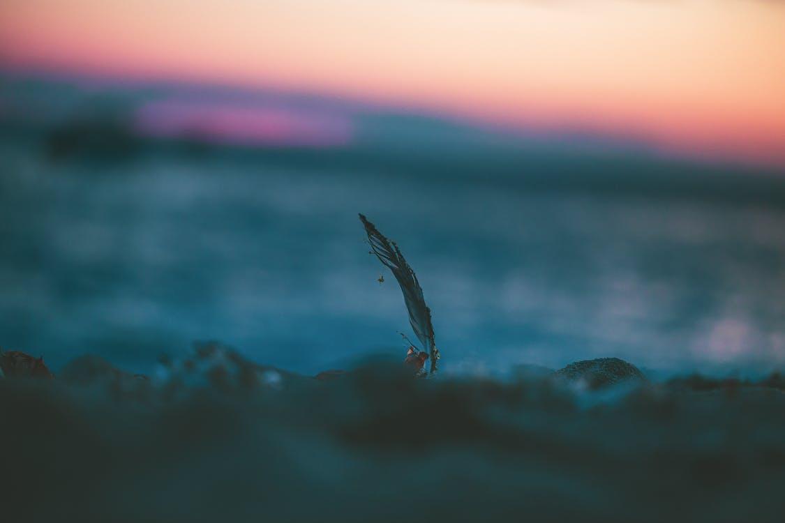 a la vora de l'oceà, abandonat, acomiadar-se