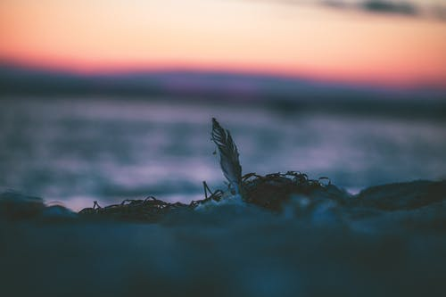 Ảnh lưu trữ miễn phí về bên bờ biển, bị bỏ rơi, biển, bình dị