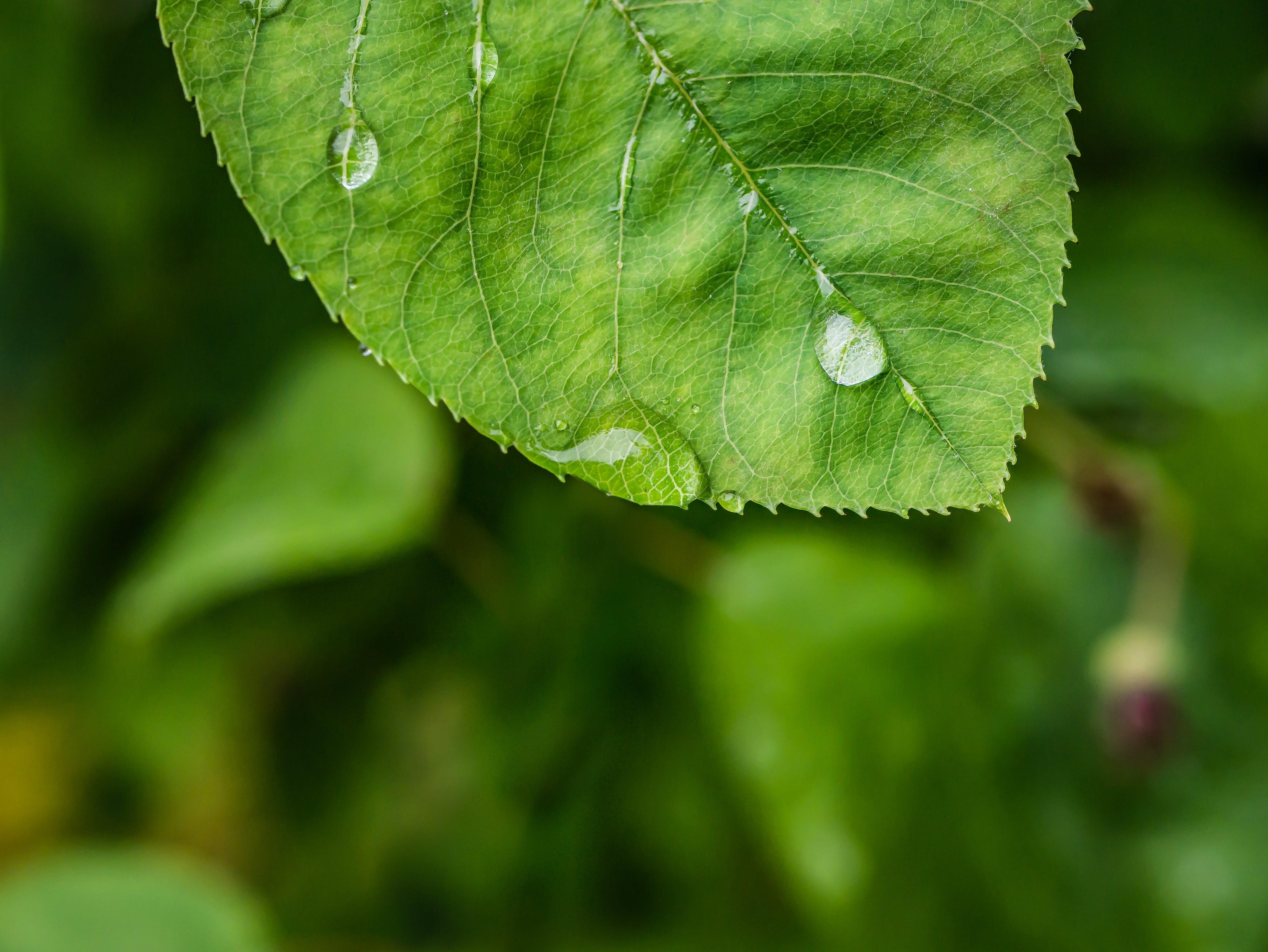 Kostenloses Stock Foto zu blatt, tau, regen, wassertropfen