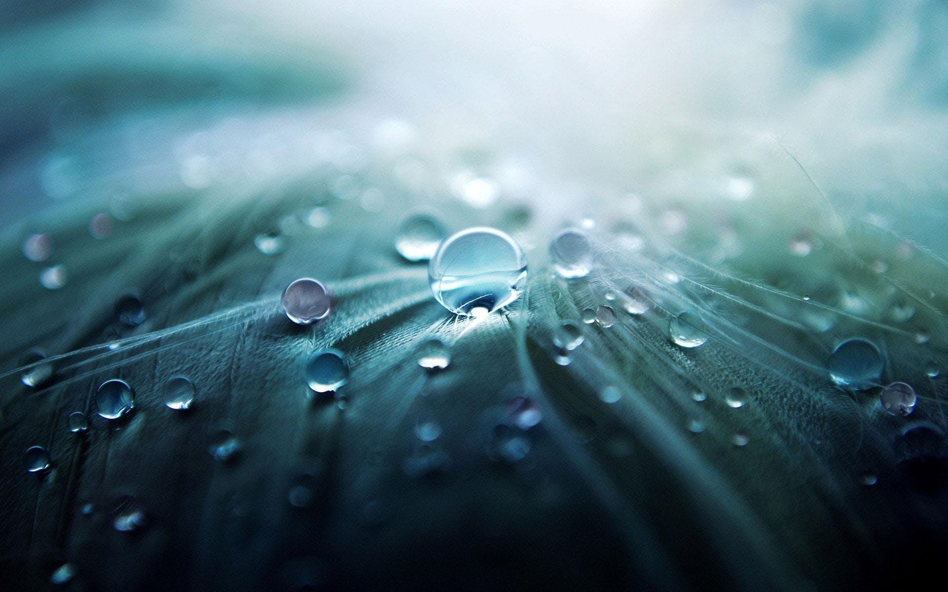 Kostnadsfri bild av bubbla, dagg, klar, konst