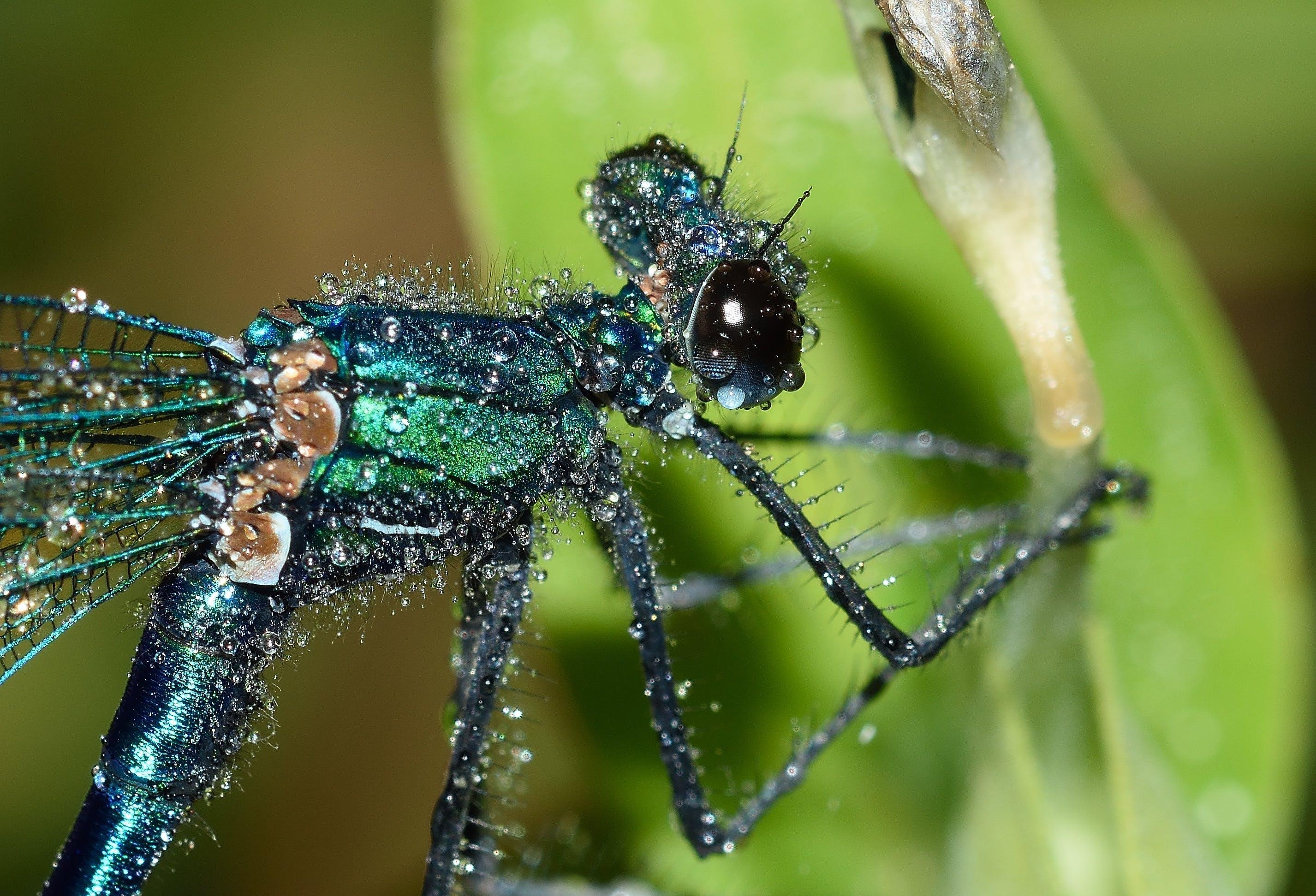Free stock photo of rain, dragonflies, macro, maid