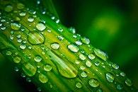 plant, leaf, blur