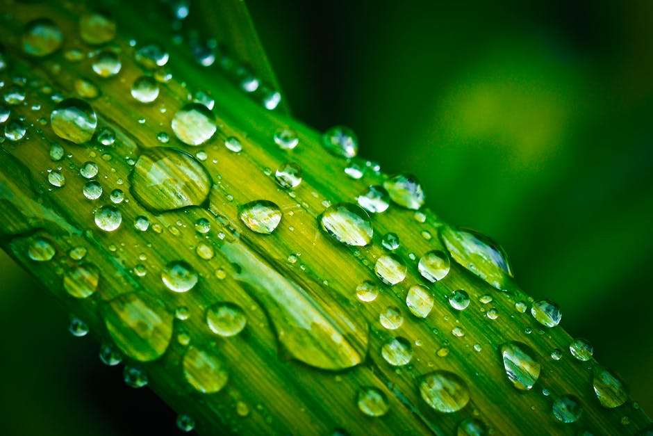 New free stock photo of plant, leaf, blur