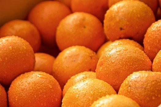 Free stock photo of dew, rain, orange