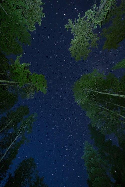 Бесплатное стоковое фото с Астрология, Астрономия, вечер, вид