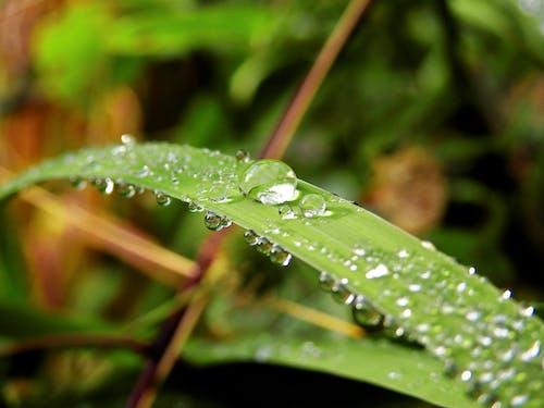 Imagine de stoc gratuită din apă, fotografie de aproape, frunză, natură