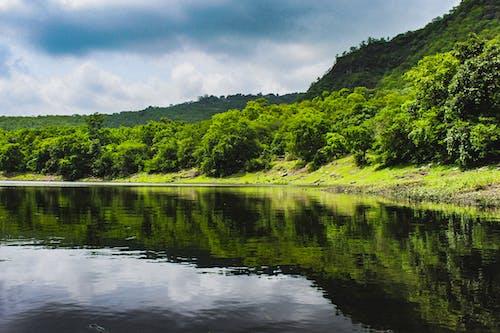 Photos gratuites de bassin, mousson, nature, vert