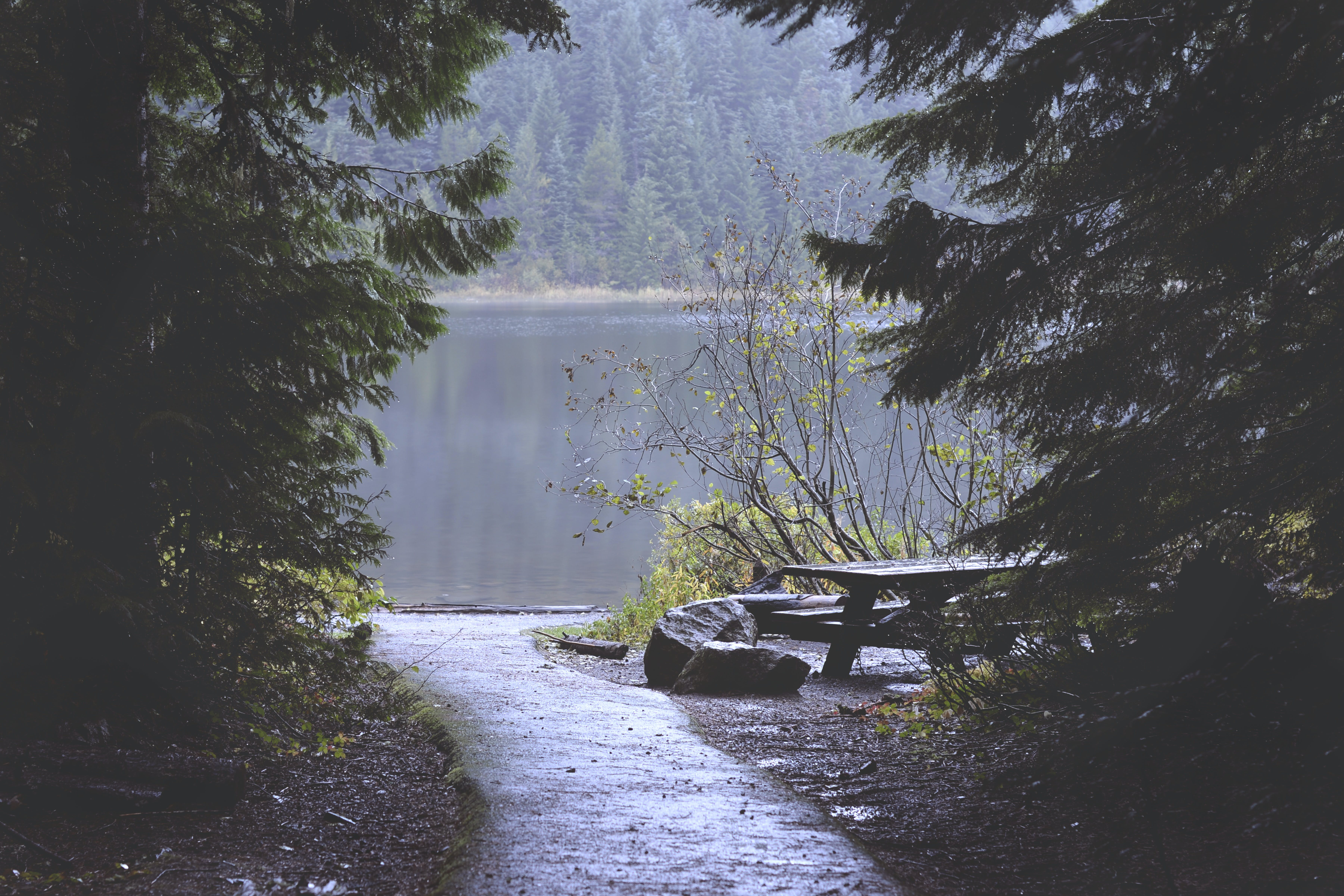 Brown Bench Near Lake Covered With Forest