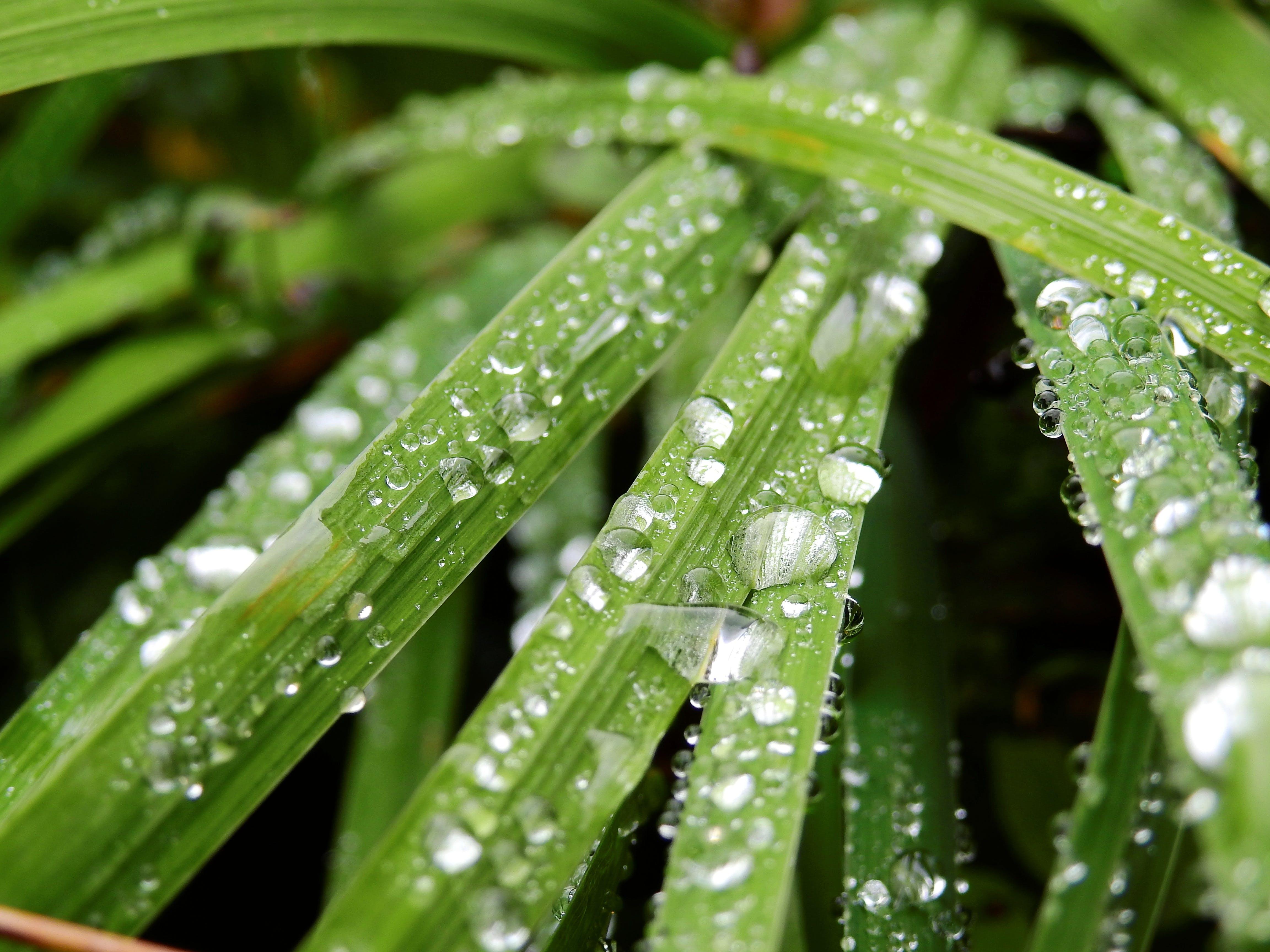 Bahçe, bitki, büyüme, çevre içeren Ücretsiz stok fotoğraf