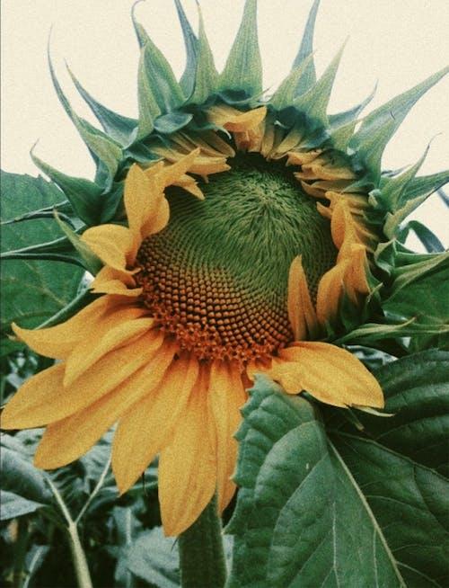 꽃, 나뭇잎, 날, 노란색의 무료 스톡 사진