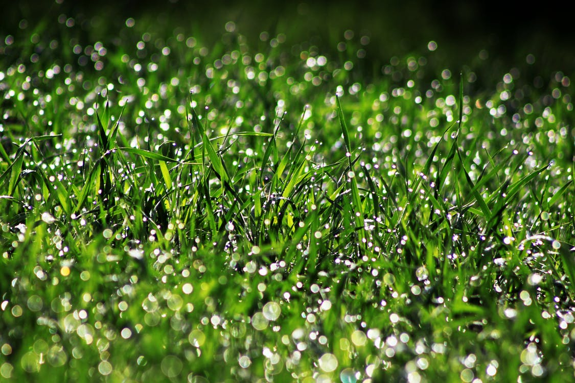 Selective Photography of Green Grass With Water Drops