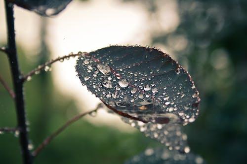 Darmowe zdjęcie z galerii z bezkręgowiec, deszcz, drewno, drzewo