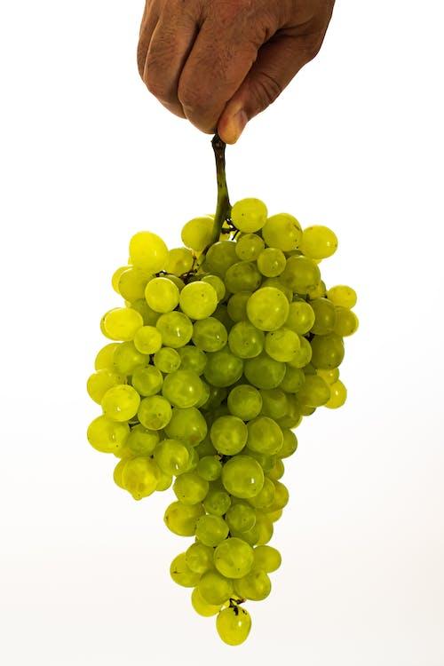 alam, anggur, berair