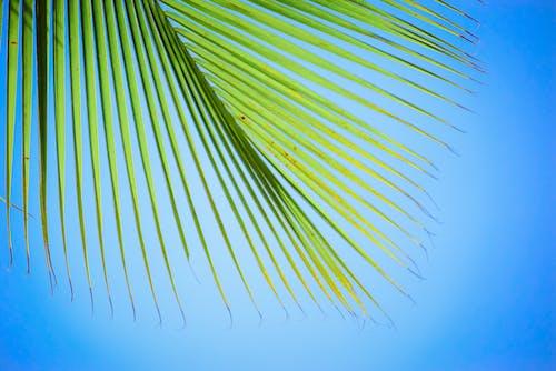 Gratis stockfoto met kokosboom